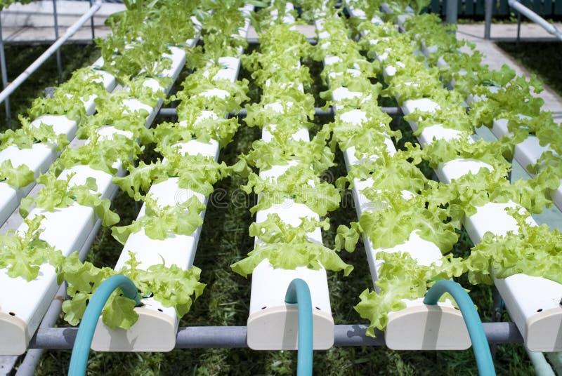 Download Hydroponic Vegetable садовничать Стоковое Изображение - изображение насчитывающей гидро, outdoors: 40577287