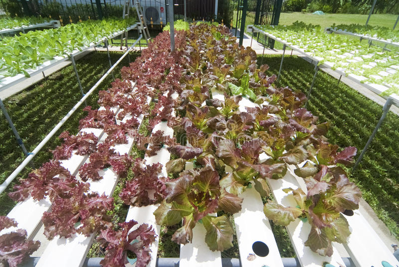 Download Hydroponic Vegetable садовничать Стоковое Изображение - изображение насчитывающей hydroponic, ботаническую: 40577293