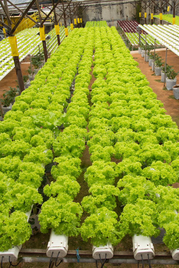 Download Hydroponic vegetable farm stock photo. Image of industrial - 27703004