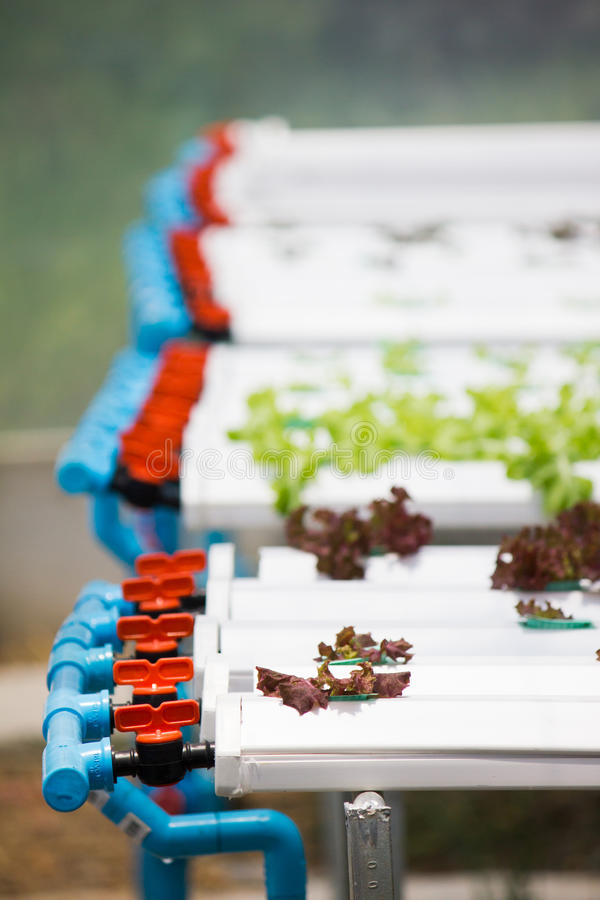 Hydroponic vegetable plantation system. In Thailand stock images