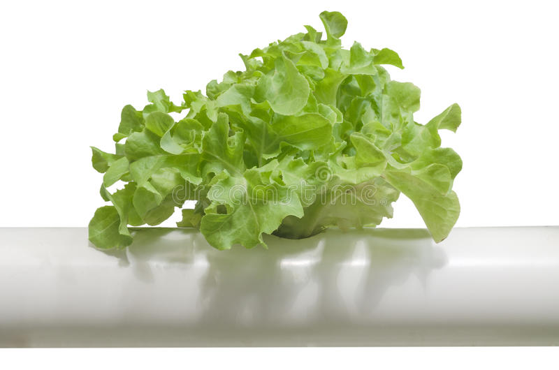 Hydroponic vegetable plantation system. On white background royalty free stock photography