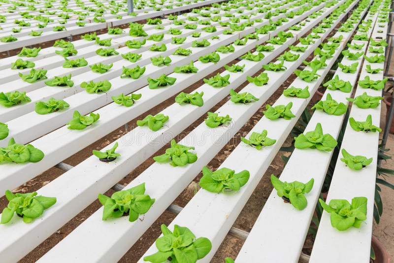 Hydroponic Vegetable Planting stock images