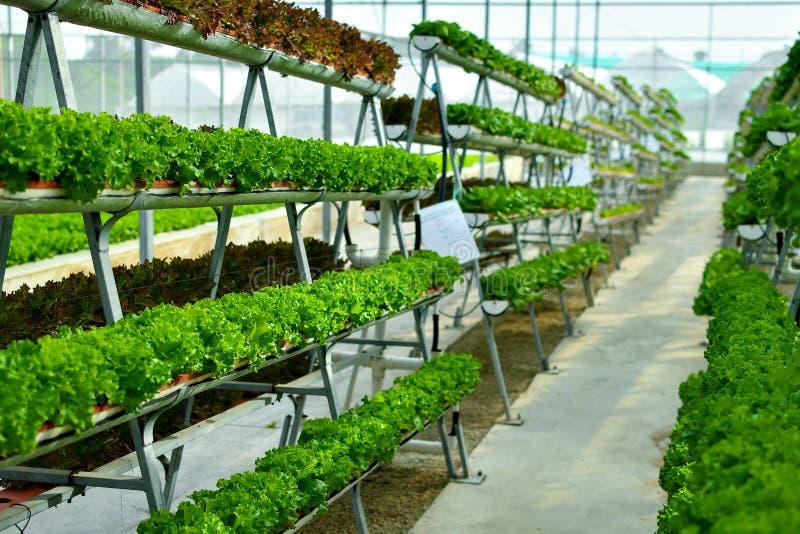 Hydroponic verticale de landbouwsystemen stock foto