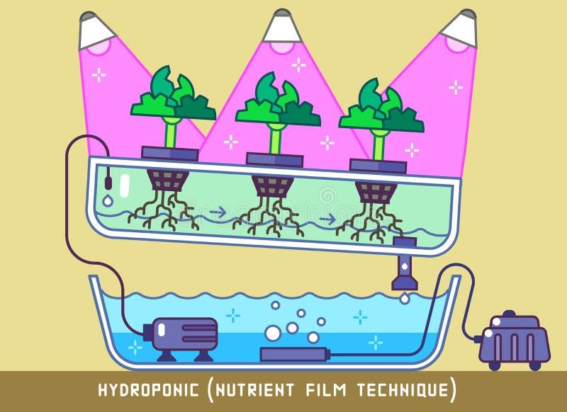 Hydroponic Voedende Filmtechniek vector illustratie