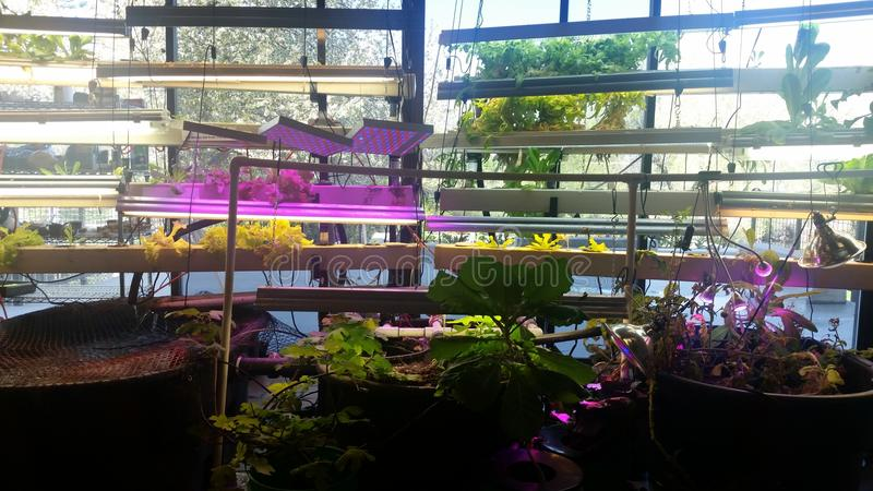 hydroponics fotografie stock