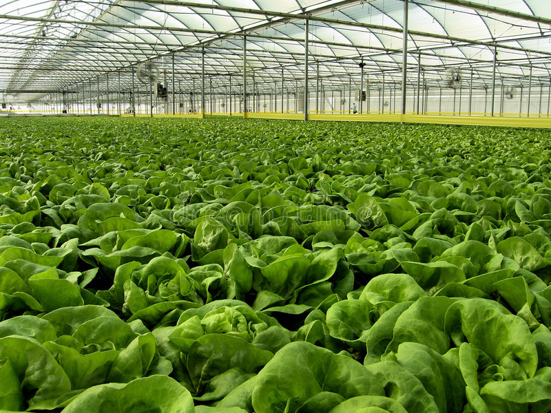 Hydroponics stock photography