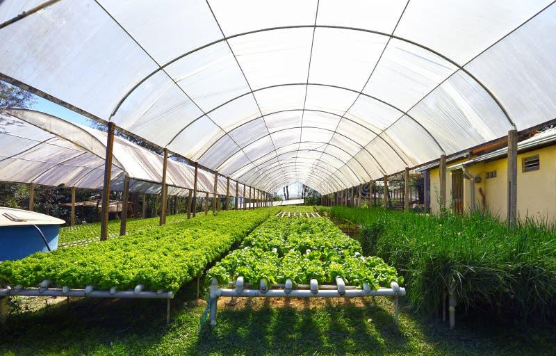 hydroponics royaltyfria foton