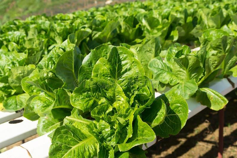 hydroponics stock afbeelding