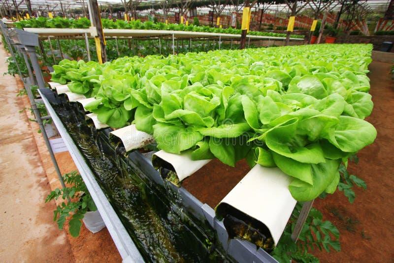 Hydroponics farming stock photos