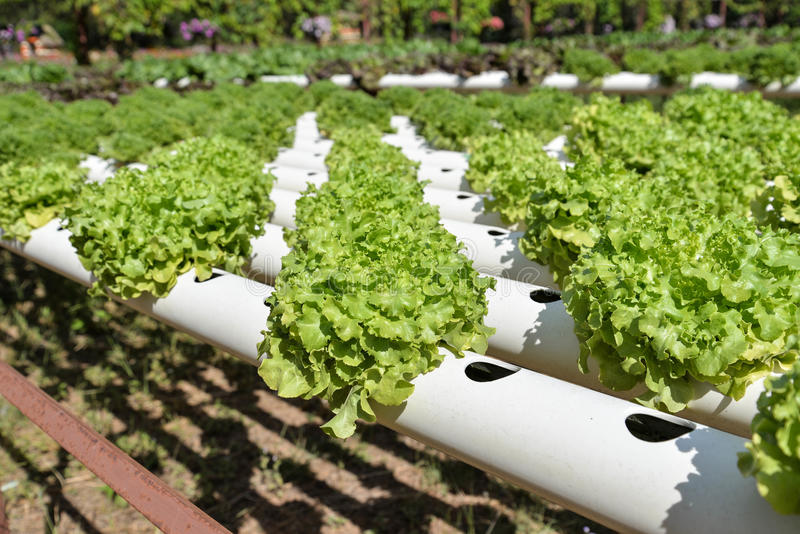 The hydroponics royalty free stock photos