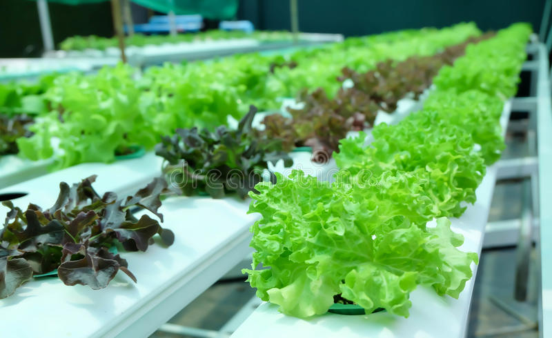 Hydroponics garden stock photography