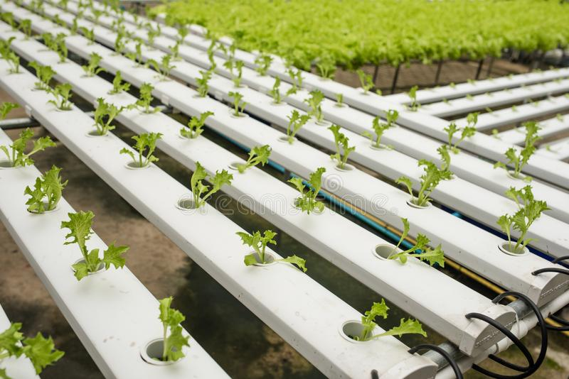 Hydroponics vegetable farm for healthy diet food stock photos