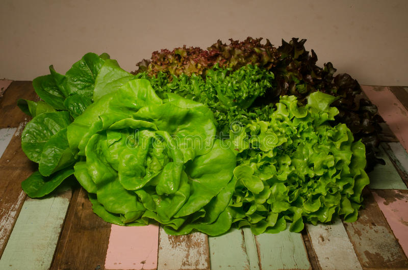 Hydroponics vegetable on wooden stock photography