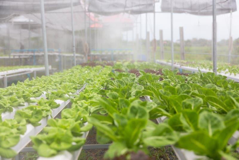 Hydroponika warzyw gospodarstwo rolne obraz stock