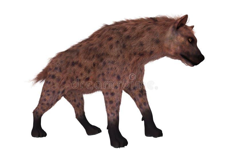 hyena för tolkning 3D på vit vektor illustrationer