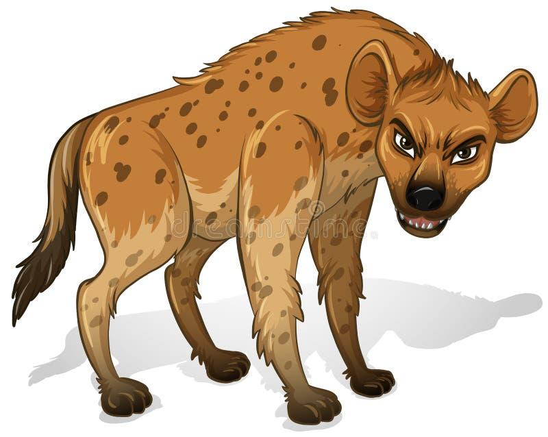 Hyena. Illustration of a close up hyenas royalty free illustration