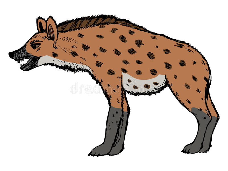 Hyena. Illustration of wildlife, zoo vector illustration