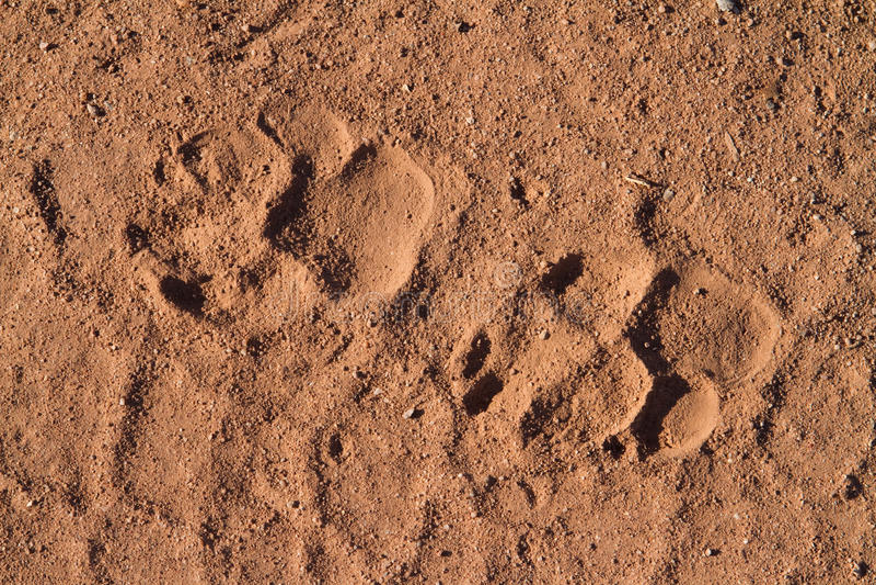 Download Hyena Prints Stock Photo - Image: 27691420