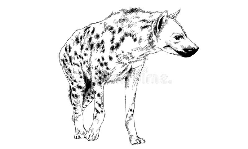 Hyena som dras i färgpulver av handen royaltyfri illustrationer