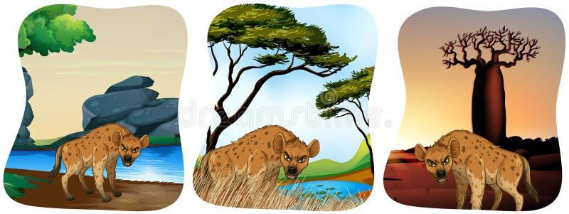 Hyenas in the field. Illustration vector illustration