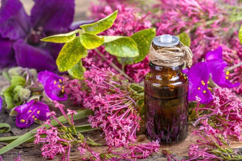Hyerbs y aceite esencial de las flores fotos de archivo