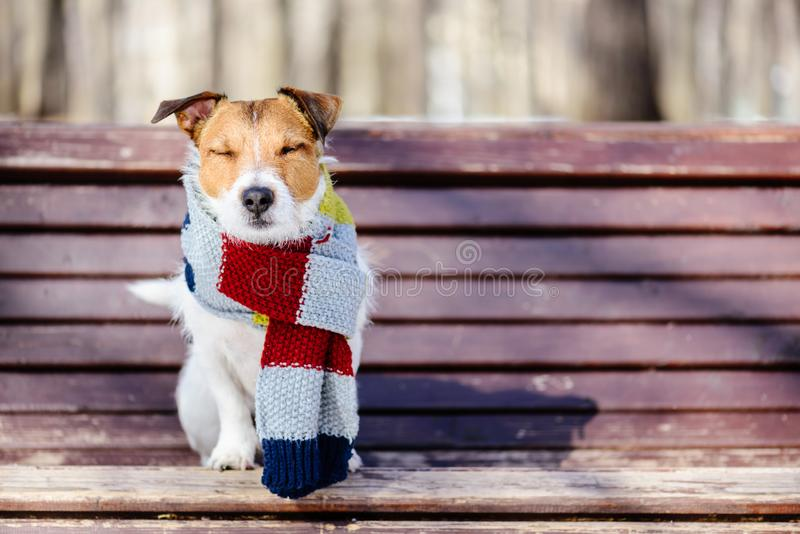 Hygge concept with happy dog wearing cozy warm scarf royalty free stock image