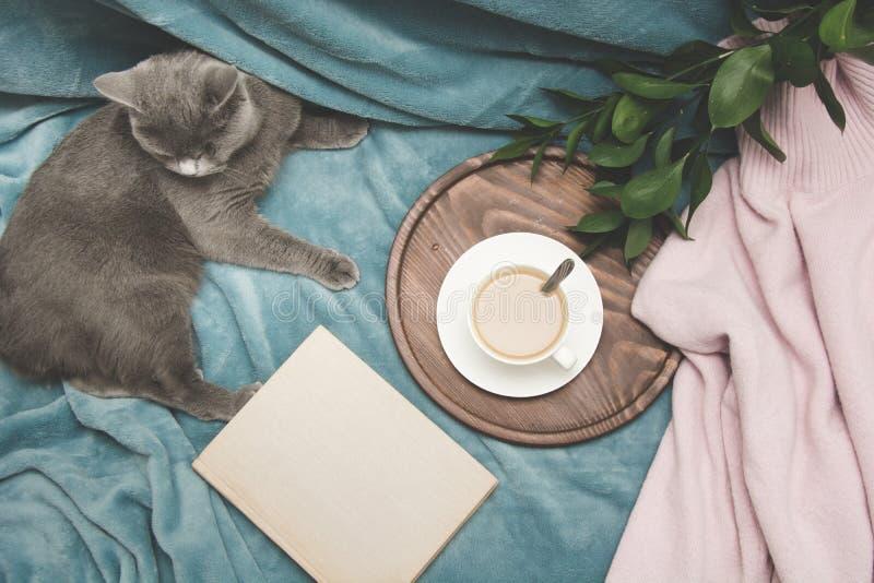 Hygge en comfortabel concept De Britse leuke kat die op comfortabel blauw rusten pled laag in huisbinnenland van woonkamer Ontbij royalty-vrije stock foto's