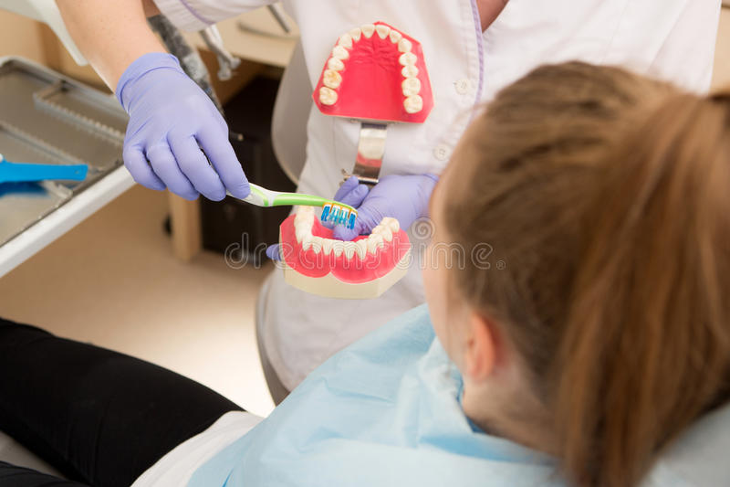 Hygiène dentaire Dentiste démontrant le brossage de dent images libres de droits