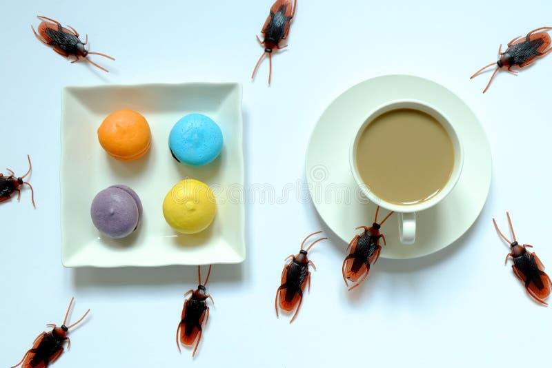 Hygiène, soins de santé et concept médical Cancrelat mangeant du macaron et du café Les cancrelats sont des vecteurs de la maladi photo stock