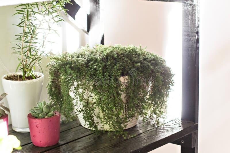Hylla med inomhus växter lade in växter arkivfoton