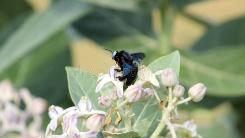 Hymenoptera wasp insect is sitting on the flower stock photo