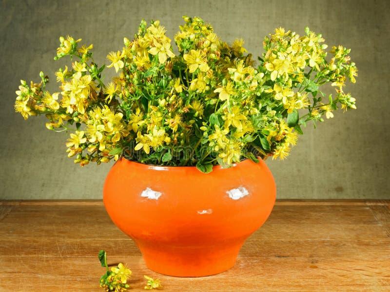 Hypericum perforatum. Still life. Bouquet of meadow flowers stock photos