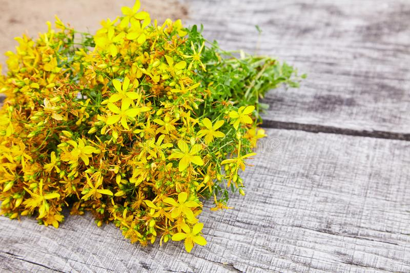 Hypericum - St Johns wort plants royalty free stock image
