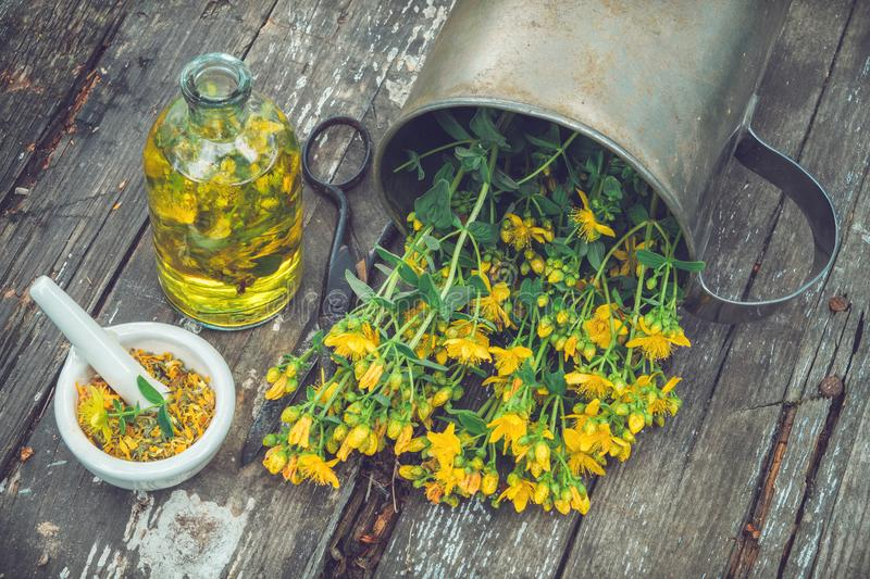 Hypericum - St Johns wort plants, oil or infusion bottle, mortar on wooden board. Hypericum - St Johns wort plants, oil or infusion bottle, mortar on wooden royalty free stock image
