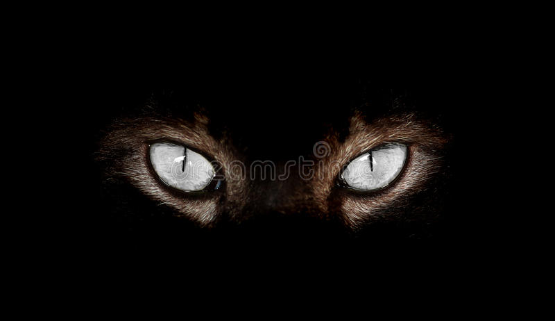 Hypnotic Cat Eyes on black background. Closeup of Hypnotic Cat Eyes on black background royalty free stock photo