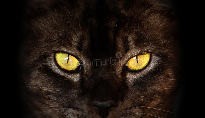 Hypnotic Cat Eyes on black background. Closeup of Hypnotic Cat Eyes on black background stock image
