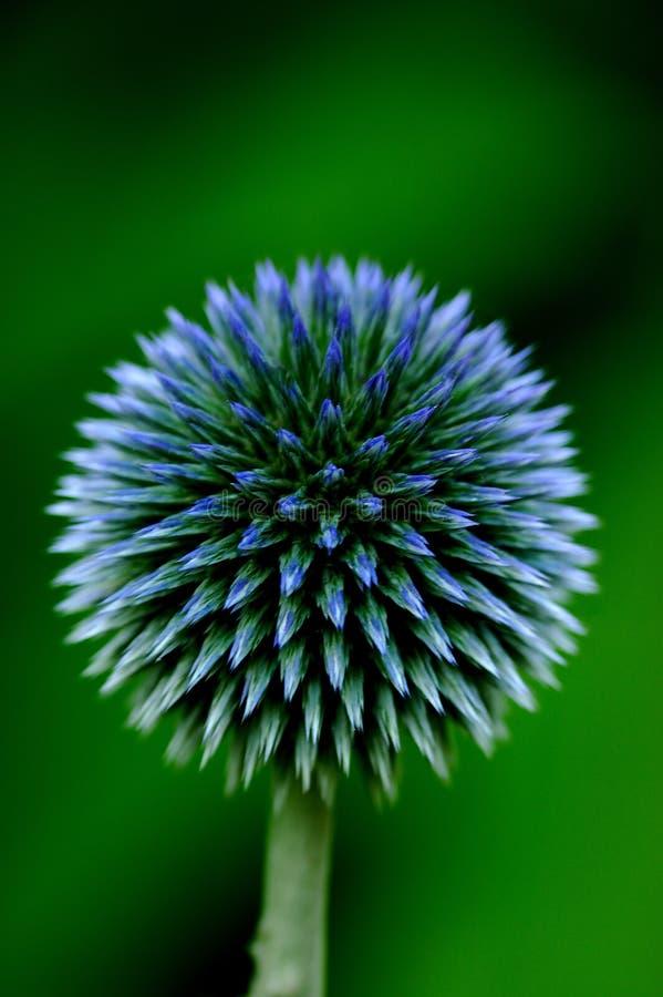Hypnotic sphere. On dark green background royalty free stock image