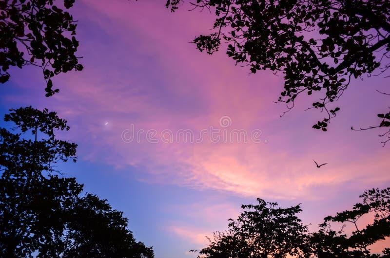 Hypnotisera, härlig och färgrik skymning Fågel, träd och halvmåne royaltyfri bild