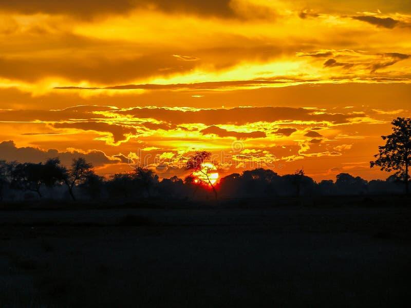Hypnotisierender, schöner und goldener Sonnenuntergang hinter dem Baum stockbild