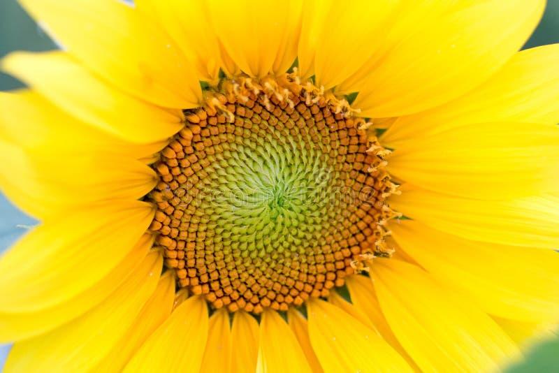 Hypnotisierender Sun stockfoto