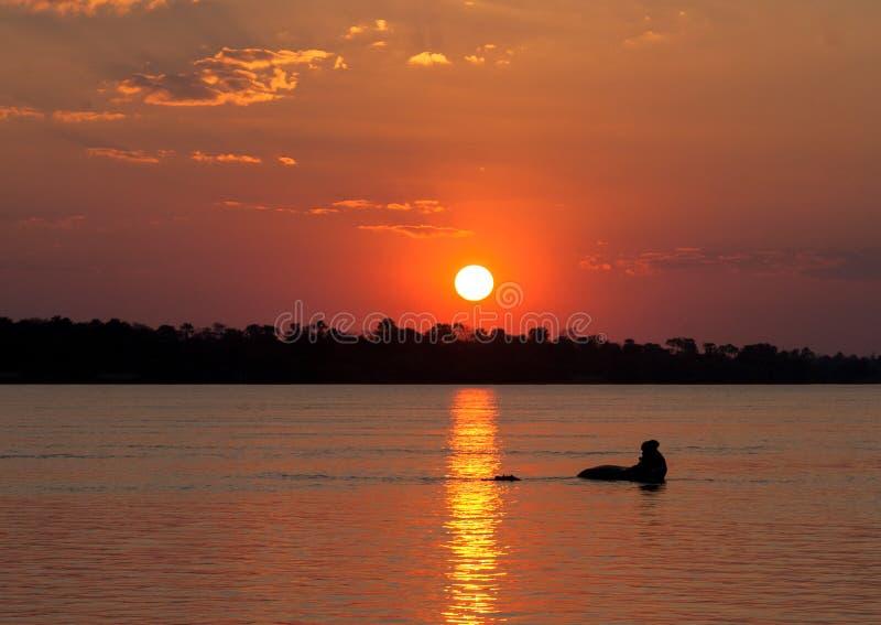 Hyppo på solnedgången royaltyfria foton