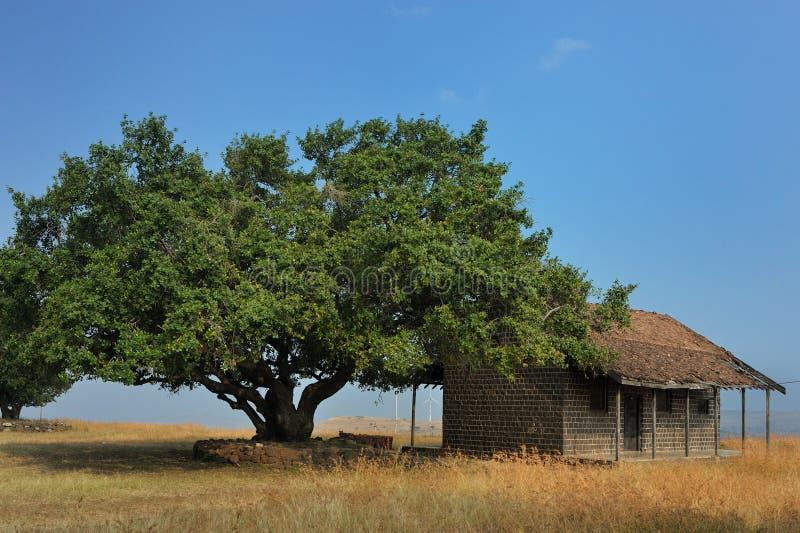 Hyug drzewo, stary dom przy Salabat Khan kopułą i knon jako Chandbibi ka Mahal Ahmednagar maharashtra zdjęcia stock
