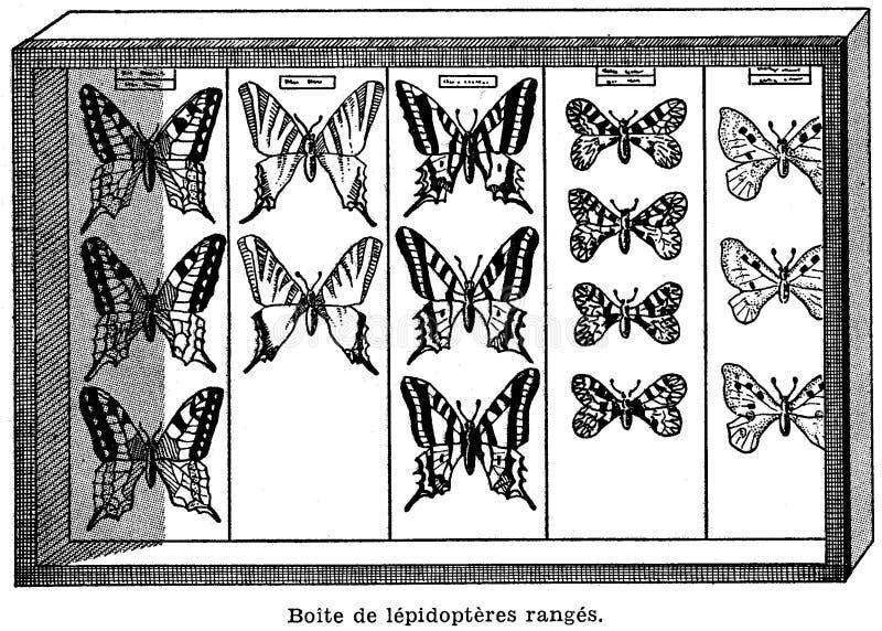 i? te-papillons royalty-vrije stock foto's
