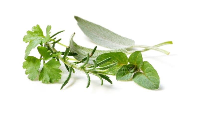 i świeże zioła obrazy stock