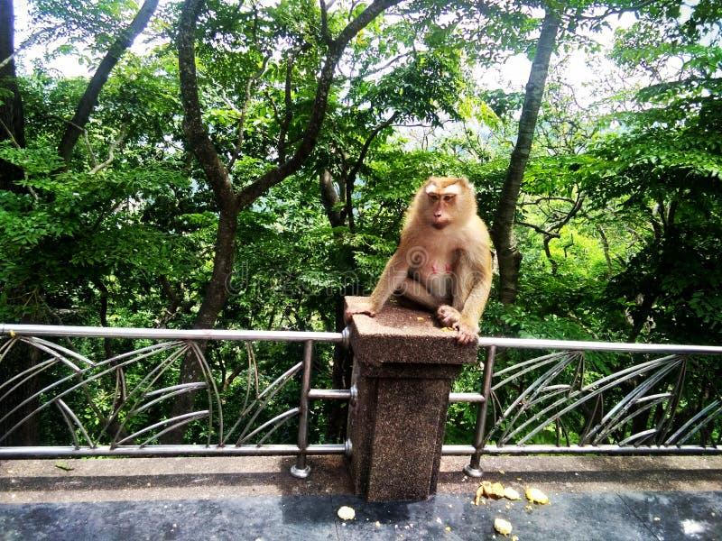 I& x27;m那么逗人喜爱的猴子 免版税库存图片
