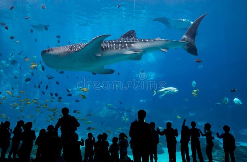 I bambini considerano mentre lo squalo balena passa fotografie stock libere da diritti