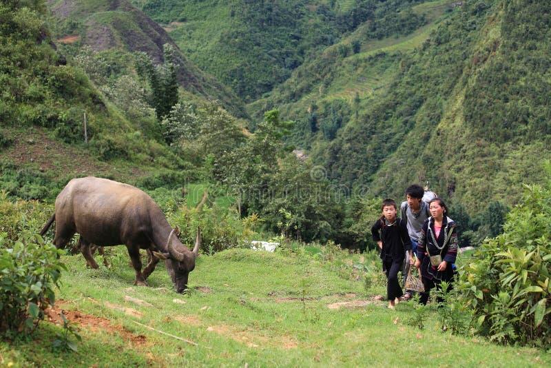 I bambini di Hmong camminano su una collina al villaggio del gatto del gatto immagini stock