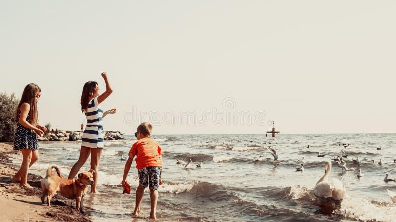 I bambini e la madre sulla spiaggia si divertono con il cigno fotografie stock libere da diritti