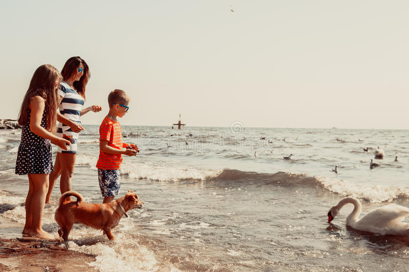 I bambini e la madre sulla spiaggia si divertono con il cigno fotografia stock libera da diritti