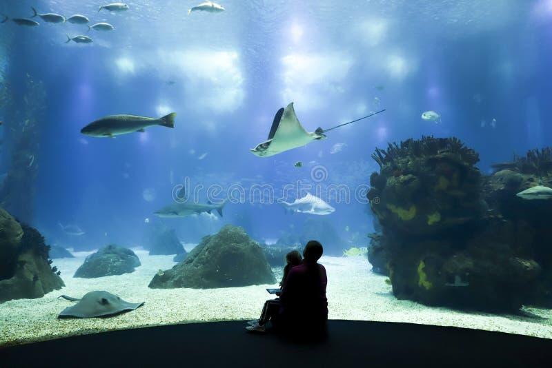 I bambini esaminano il pesce in acquario fotografia stock libera da diritti